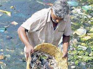 If untreated water keeps getting pumped into the lakes, it would soon contaminate groundwater resources, as is evident from the higher nitrate levels in the borewells in the vicinity of polluted lakes in Bengaluru.