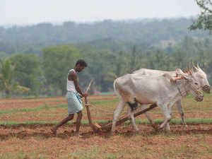 Drought in southern states has affected the cultivation of major commodities like rice, cotton and spices. Production of these commodities is likely to come down.