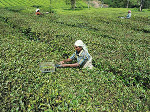 The Tea Board has selected Bank of India as the new settlement bank for pan-India e-auction from sale number 25, which falls on the third week of next month.