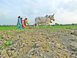 Admitting that farmers' suicide was a sorry state of affairs, Gadkari said the Centre was committed to addressing their problems and bring more cultivable areas under irrigation.