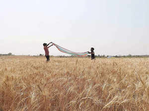 The PMFBY has replaced the existing two crop insurance schemes -- the National Agricultural Insurance Scheme (NAIS) and the Modified NAIS.