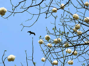 The cotton demand supply imbalance is likely to prolong till beginning of November due to late sowing owing to delayed rain this year.