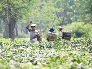 export of horticultural crops in pakistan