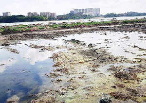 Raw sewage from Yelahanka, Allalasandra and Kogilu is entering the lake through the wetlands. On top of this, researchers said the wetland has not been maintained properly .