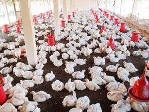 Last year, the WTO had ruled that India's ban on poultry shipments from the US was not tenable.