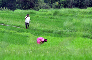 Total kharif planting is up 6.3 per cent at 799.51 lakh hectares compared to a year ago, but the output may rise even higher due to better productivity in the course of this year's normal monsoon.