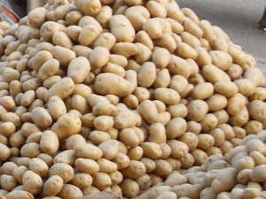 Wholesale prices of potato on decline - The Economic Times