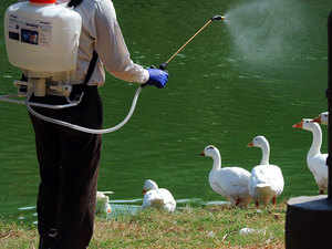 The committee said that the control and containment measures of avian influenza in the affected zoos are being continued which includes continuted surveillance and screening for any dead bird, enforcement of bio-security measures and disinfection by spraying of anti-virus.