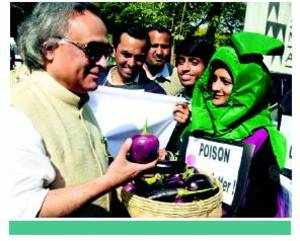 Government decides against Bt Brinjal for now