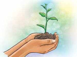 As per the DPR, a total 6,197 sites have been identified by Forest Departments of five participating states - Uttarakhand, Uttar Pradesh, Bihar, Jharkhand and West Bengal - for plantations.