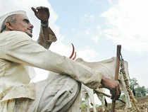 farmer-bccl (2)