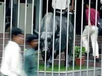 bull in cage-bccl
