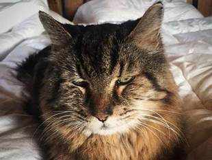 Corduroy became the world's oldest cat, according to Guinness, when 30-year-old Scooter passed away earlier this year in Texas.