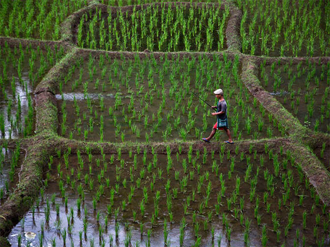 Key changes to back more crops likely - The Economic Times