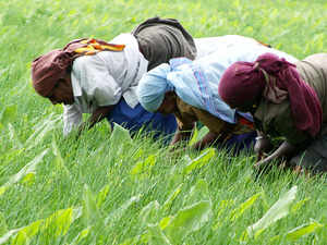 Niti Aayog has pegged farm and allied sector's growth at 5.5 per cent for this fiscal on the back of record kharif foodgrain production