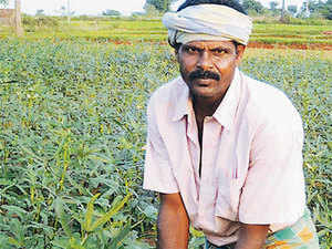 That the rabi crop is not getting required inputs of seeds, fertilisers and pesticides or fungicides is confirmed by traders.