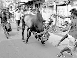 Enthusiasts tried to conduct Jallikkattu defying Supreme Court verdict at Somarasampettai and few other parts of the district on Friday.