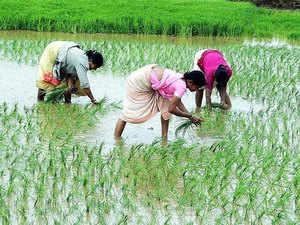 """""""Whether this will lead to a commensurate increase in production will depend on the extent to which farmers' access to inputs — seeds, fertiliser, credit, and labour — was impeded by demonetisation."""""""