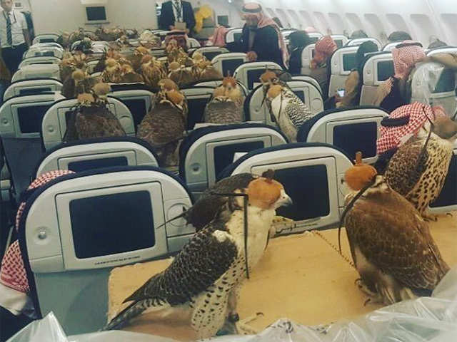 Flight for falcons