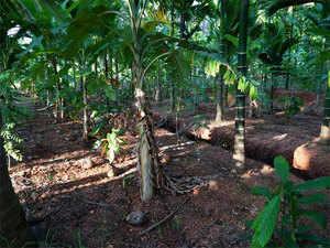 plantation-crops