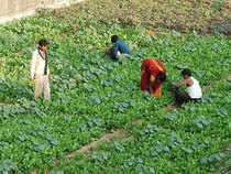When the size of 67 per cent of India's farms is below one hectare, a size that is not optimal for ensuring higher investment to raise productivity and income, how can endless subsidies solve farm loan waiver problem?