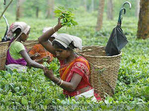 Indian production during CY2016 was also up by around 2.5%, due to an increase in the North Indian crop, which accounts for over 80% of the total bulk tea production.