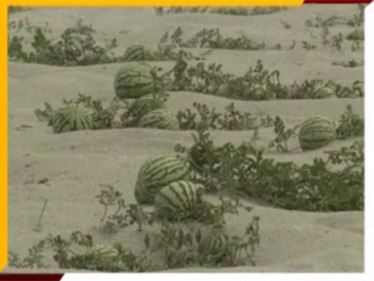 Farmer Videos: Watch Farmer News Video - Page 7