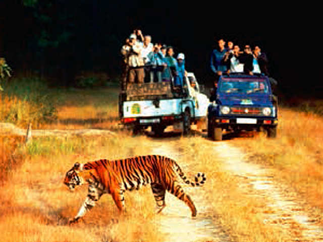 Following the pugmarks: Take a trip to a wildlife sanctury and bring out your wild side!