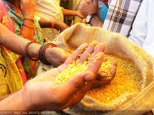 Tur dal contributes 15 per cent of the total 22 million tonnes of pulses output.