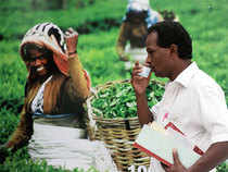 Working capital requirement and interest cost may rise for tea sector once GST is implemented
