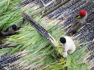 This year growth in average yield had been registered both in case of Plant and Pedi sugarcane.  Compared to last year, growth in plants average yield was registered as 62.64 quintal.