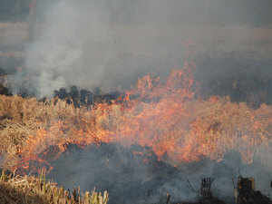 Punjab and Haryana have been facing severe criticism for their practice of burning the crop residues, especially in the paddy harvesting season.