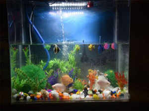 Ornamental fish industry hit by new regulations - The