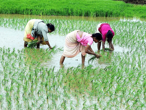 In its report on doubling farmers' income presented to Prime Minister Narendra Modi, Niti Aayog has mooted reforms to address the politically sensitive issue of crop prices.