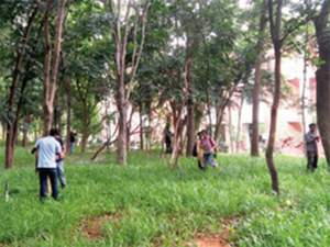 The mapping of trees on the campus included taking pictures of trees, details of leaves and barks and species and computing the height of the trees.