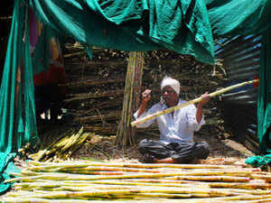 Cooperative Sugar Mills in the State have purchased 362.31 lakh quintals of sugarcane during the crushing season 2016-17.