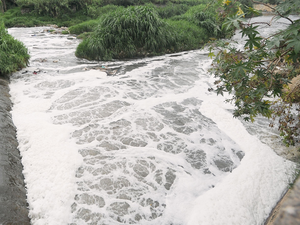 The Bangalore Water Supply and Sewerage Board (BWSSB) has budgeted Rs 4.89 crore for a consultant to find out how rainwater can be harnessed in the Vrishabhavathi valley, with the river already foaming.
