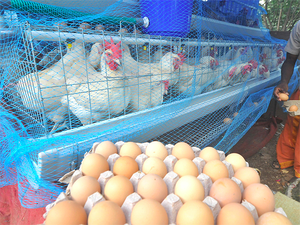 Srinivasa Group plans to invest nearly Rs 300 crore in venturing into the retail market and into value added egg products like egg powder, ready to eat products, sausages etc.