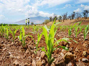 """In its 2014 election manifesto, BJP had said, """"GM foods will not be allowed without full scientific evaluation on its long-term effects on soil, production and biological impact on consumers."""""""
