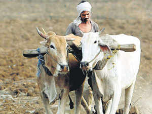 The government has set a target of planting crop on 105.86 million hectare this kharif season.