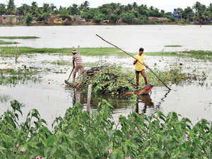With the help of a nonprofit, the Perungalathur lake is now being cleaned up.