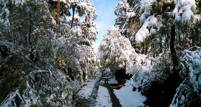 Binsar in winters
