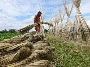 The agriculture department is trying to revive forgotten varieties of aromatic rice like Radha Tilak, Kala Bhat, Dudheshwar, Hamai, Jhumpuri, Khara and Balam.