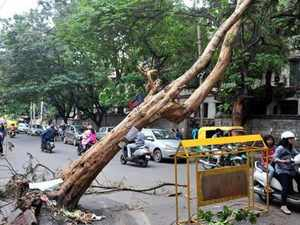 While concern has been raised towards flooding of homes and damage to roads, attention towards urban tree management -or the lack of it -has not received the attention it deserves.