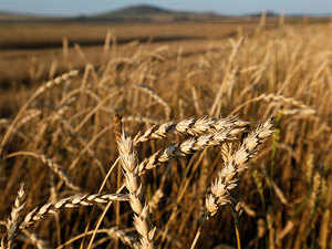 The report noted that slow progress on crop sowing means that there could be downside risks to its agriculture GVA growth forecast.