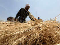 The wheat for delivery in September traded higher by Rs 10, or 0.62 per cent to Rs 1,626 per quintal in 630 lots.