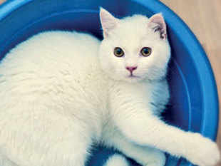 'Can a Cat Be Both a Solid and a Liquid?' was inspired by photos of cats tucked into glasses and buckets.