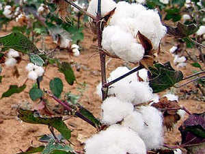 The cotton price would also be comparatively lower throughout the season and therefore, the domestic demand would pick up