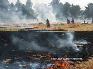 The state agriculture department is extending subsidy of up to 40% on purchase of equipment to tackle burning of paddy straw.