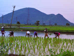 Till September 8, area sown to rice remained down at 371.46 lakh hectare (LH) as against 376.89 LH in the year-agop period, as per the official data.
